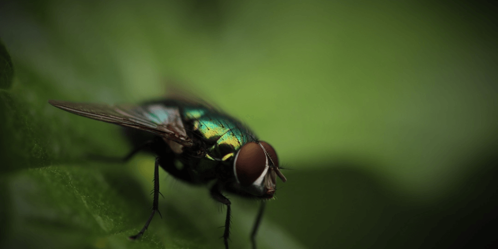 Remove Flies and other Flying Insects