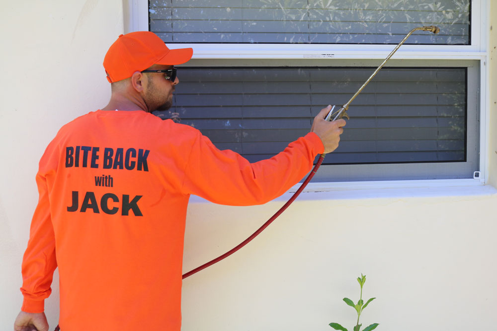 Window Pest Inspection and Extermination